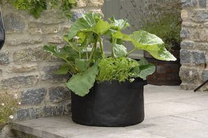 Patio fruit and veg grow bags