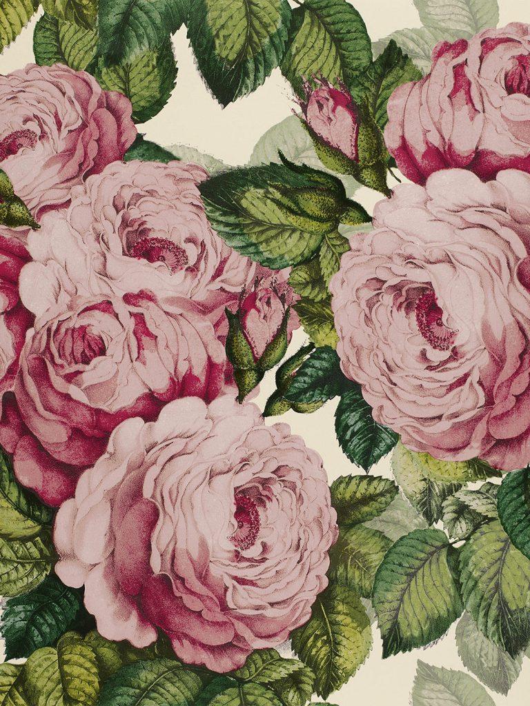 Tuberose pink vintage rose wallpaper design