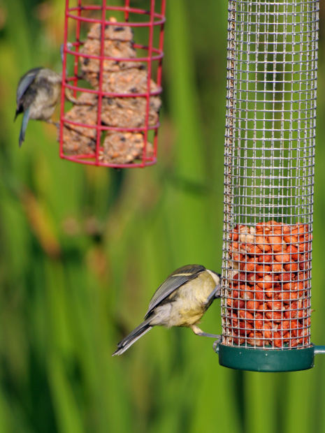 Feed the birds in style this January