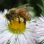Easy steps to a bee-friendly garden