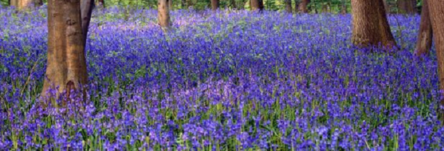 Feeling blue: Top 10 bluebell-inspired accessories