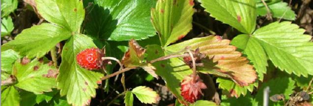 Strawberry sensation: Ideas for seasonal eating