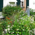 Plants for a traditional cottage garden – blues