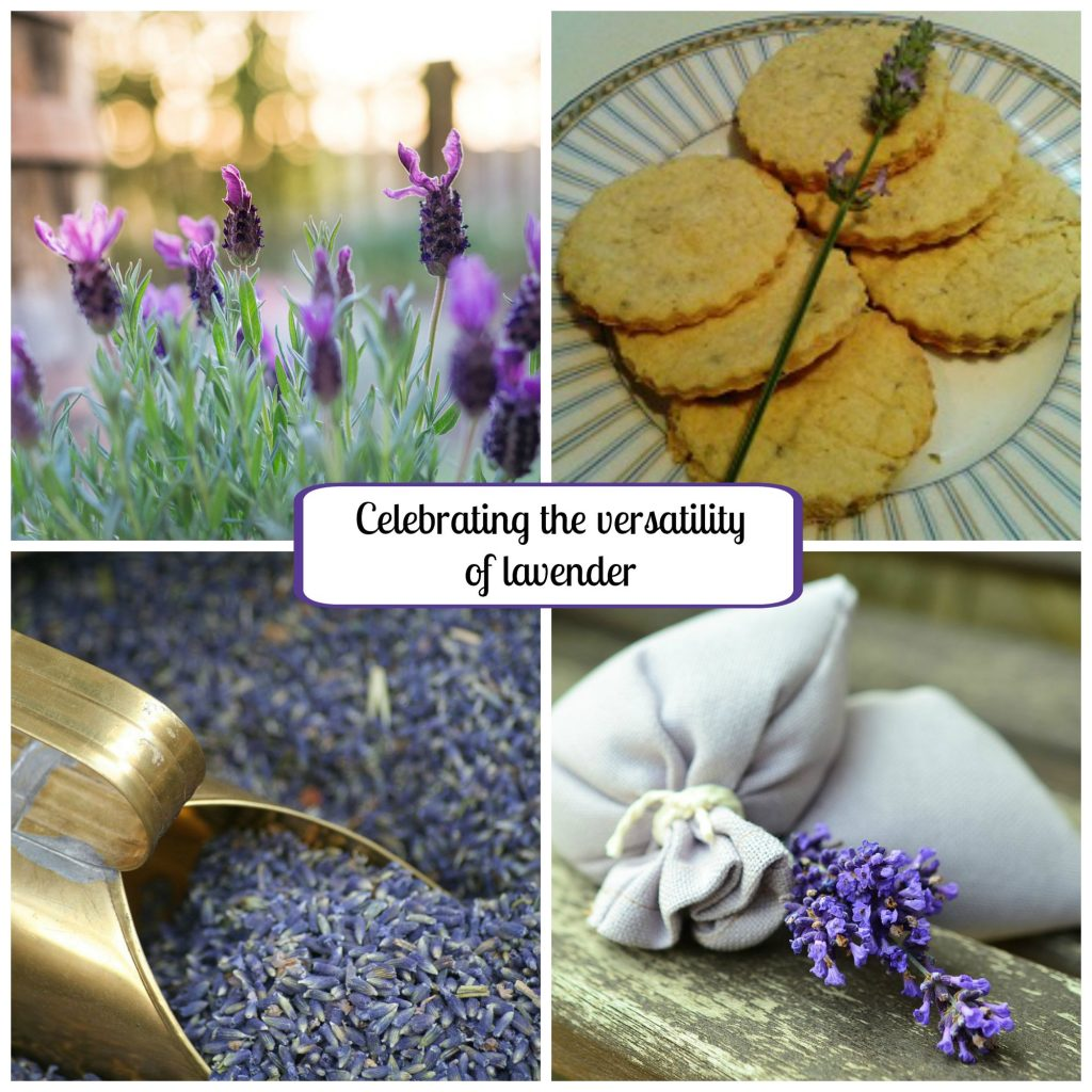 Versatile lavender: Grow, make, bake and drink