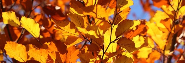Cosy Home guide: Essential autumn gardening jobs