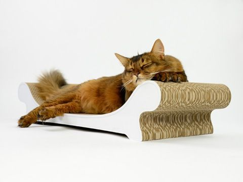 Let your cat relax on this purr-fect sofa!