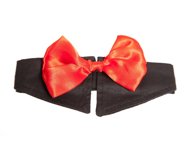 Every dog needs a bow tie...right?! Get your canine friend looking dapper.