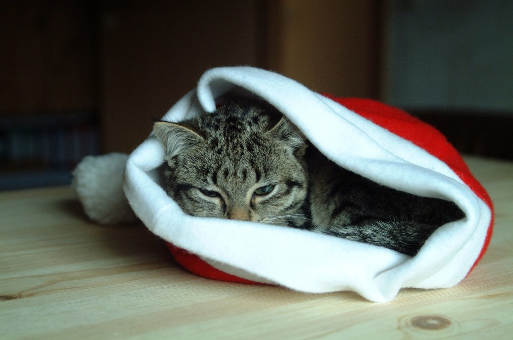 Cute cosy cat in a Christmas hat