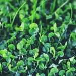 Luck of the Irish: the perfect St Patrick's Day celebration