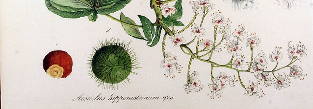 Decorating your home with botanical illustrations