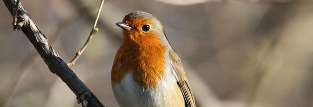 Feed the birds: attracting wildlife to your garden