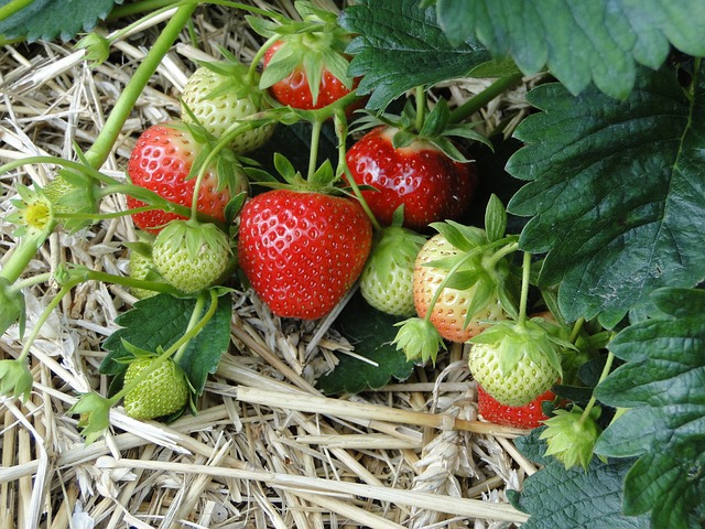Garden guide: How to grow your own fruit