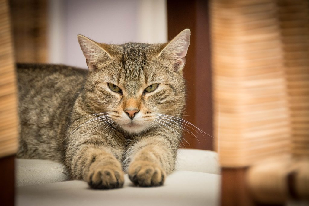 Cat's whiskers: celebrate International Cat Day