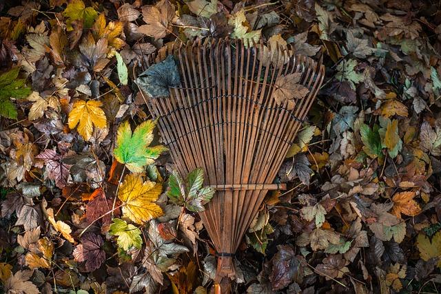 Autumn gardening: get your garden winter ready