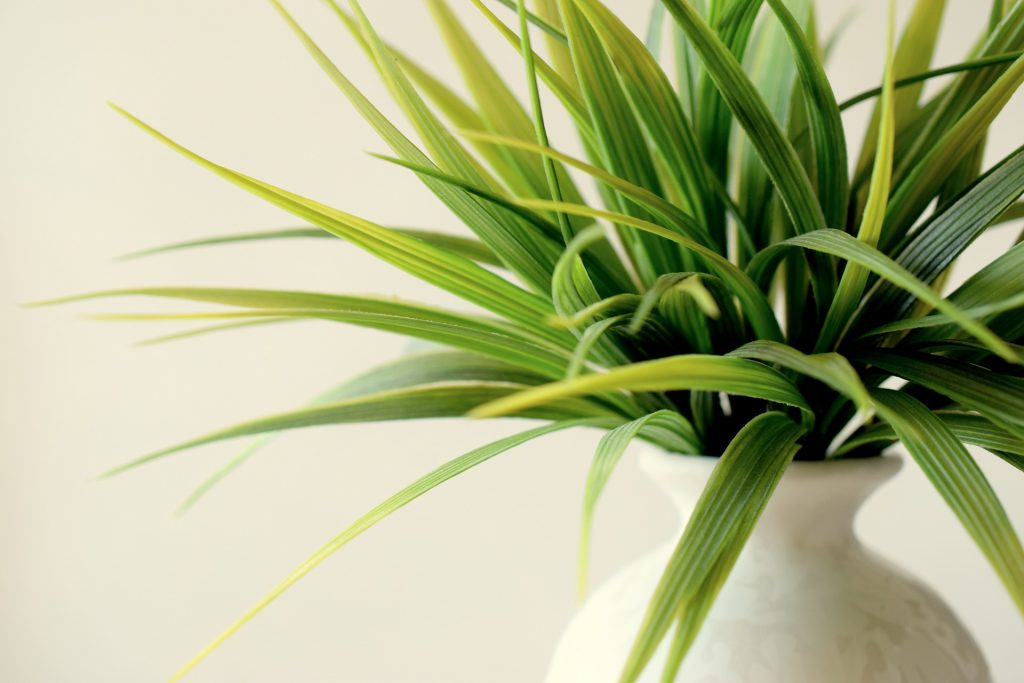 Add plants to your home interior, there are plenty of benefits to be had