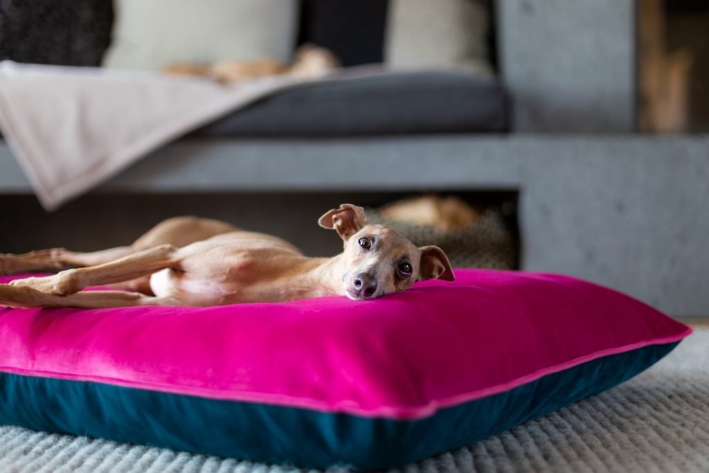 Dog-gone cosy: an interview with Christine Chau of Charley Chau luxury dog bedding