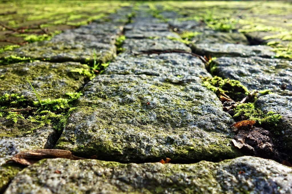 Spring gardening tips: clean the moss and slime off your garden paths ready for the summer months