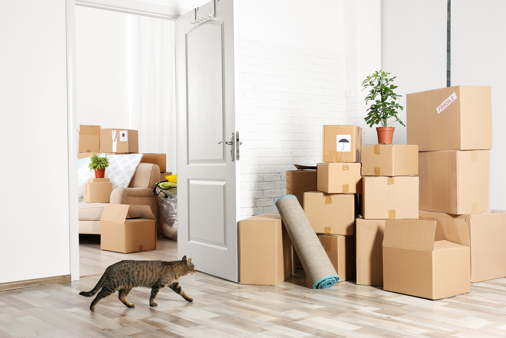 How to nail the job of packing for a house move