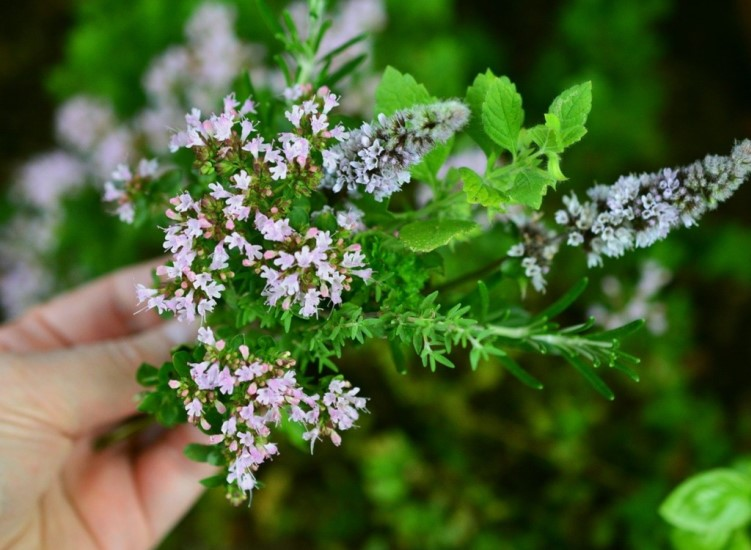 How to plant and maintain a herb garden from scratch