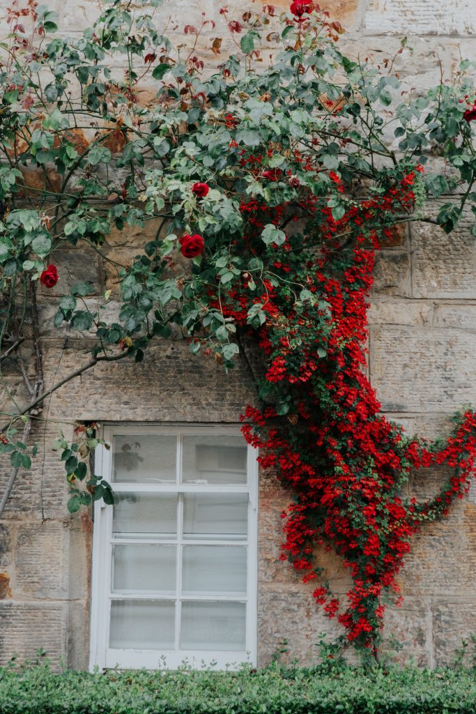 Climbing plants can be used to add height and colour to a garden