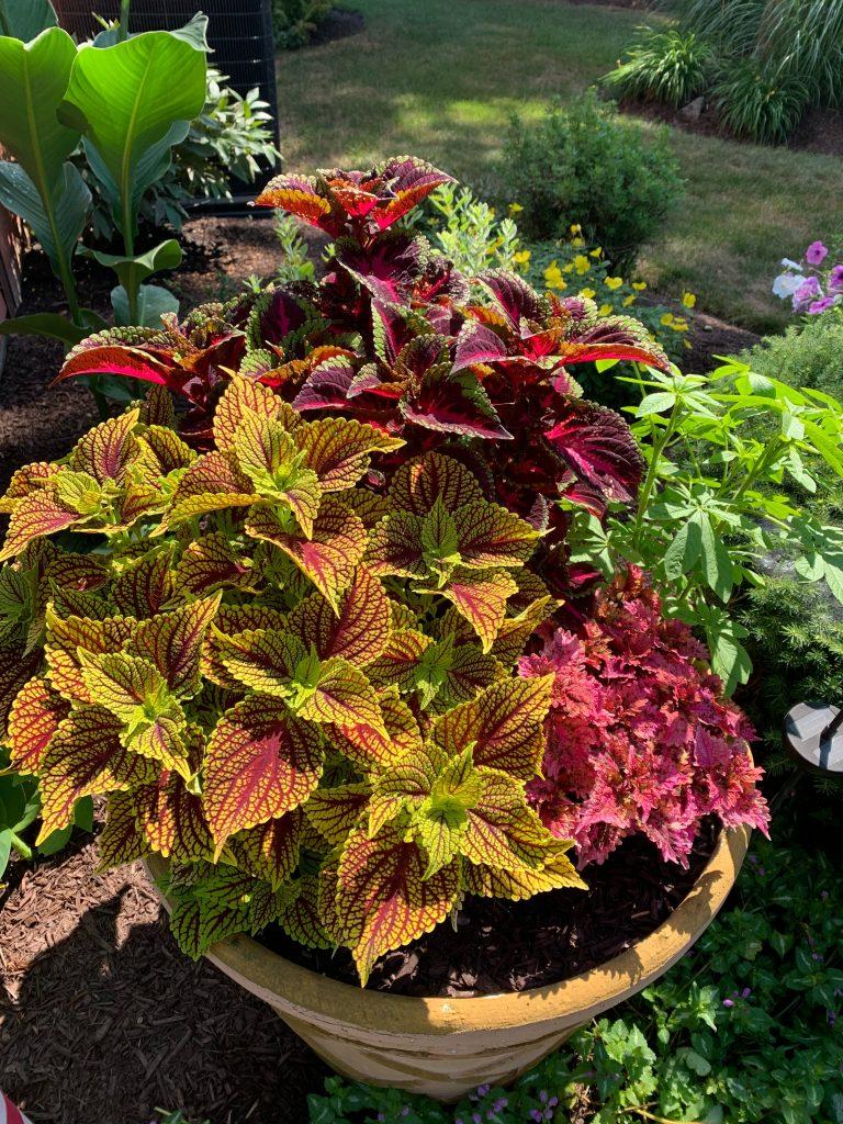 Colourful garden plants add a splash of interest to gardens