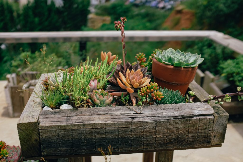 Wooden garden planter filled with succulents