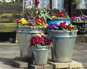 Pop plants in reclaimed pots to create height in your garden