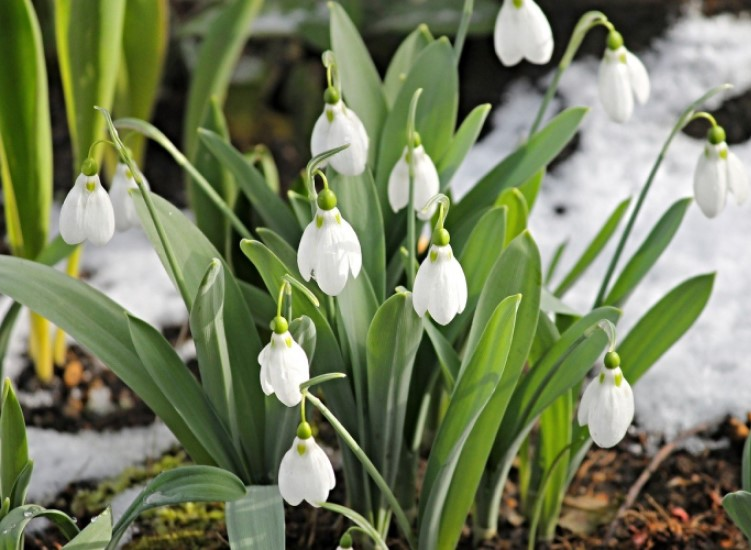 Things to do in the garden in February