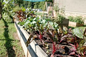 Create a vegetable patch in your garden and learn to grow your own
